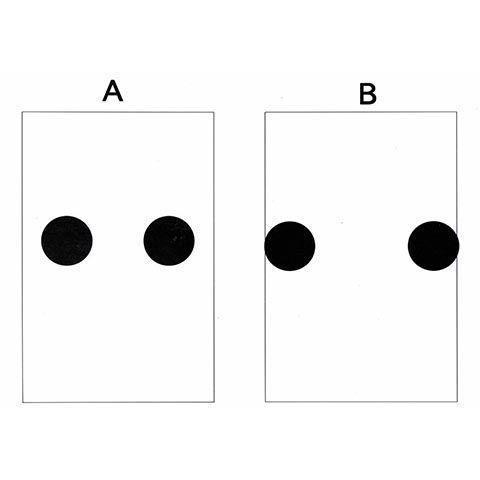 チークの位置によって、印象が変わる説明図
